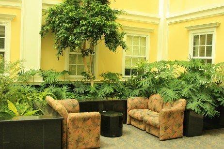 Plantas dentro de casa fazem mal ou bem 2 quartos Interior design plants inside house