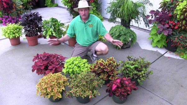 10 plantas que gostam de sombra 2 quartos - Flores de sombra ...